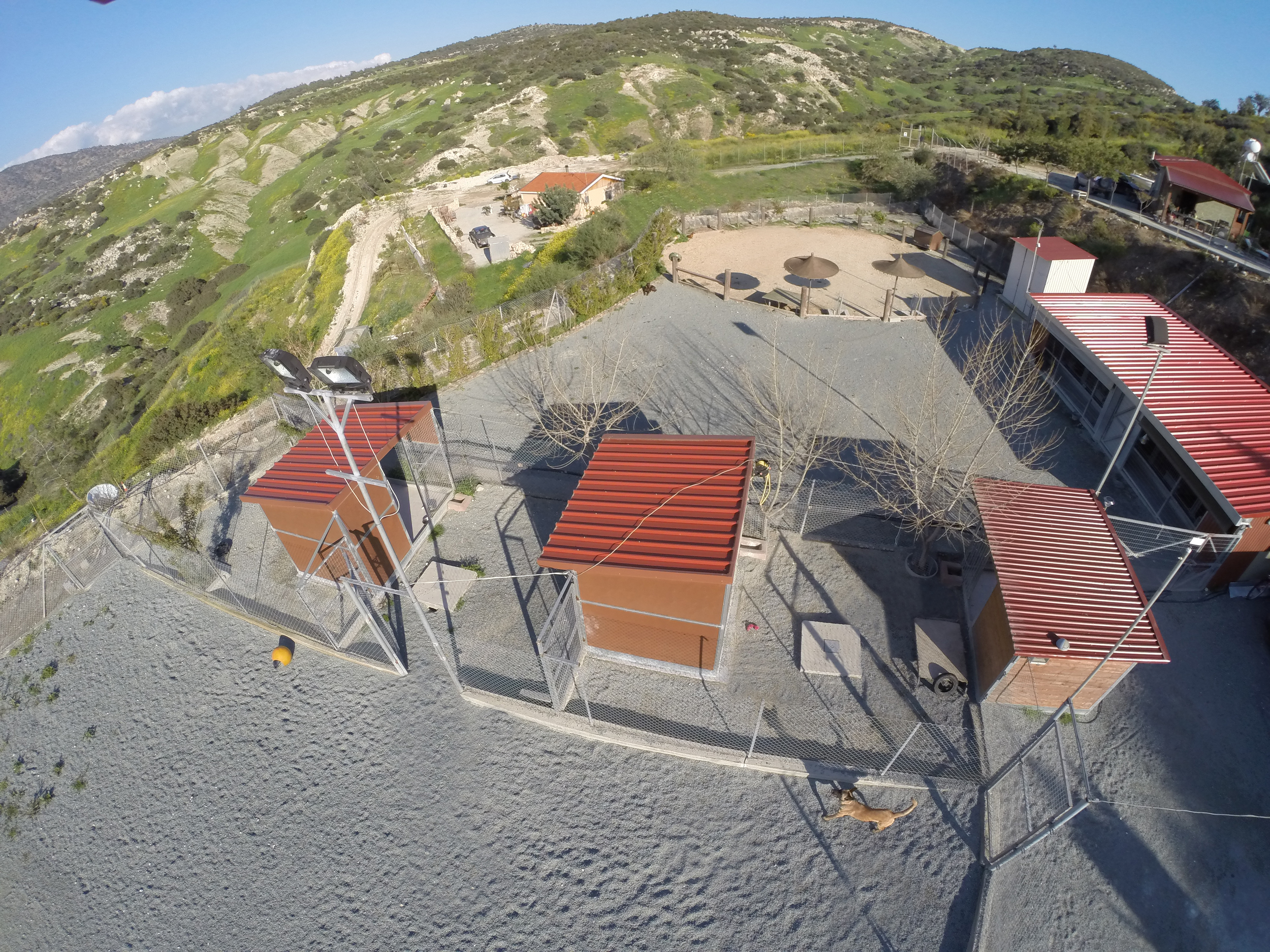 Dog Ranch - Cyprus Dog Hotel | Detached Outdoor Boarding Kennels with Private Yards | Daycare and Training Area