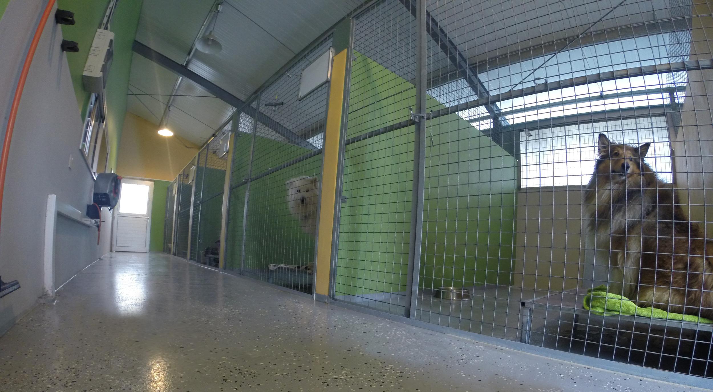 dog_ranch_cyprus_dog_hotel_indoor_kennels.jpg