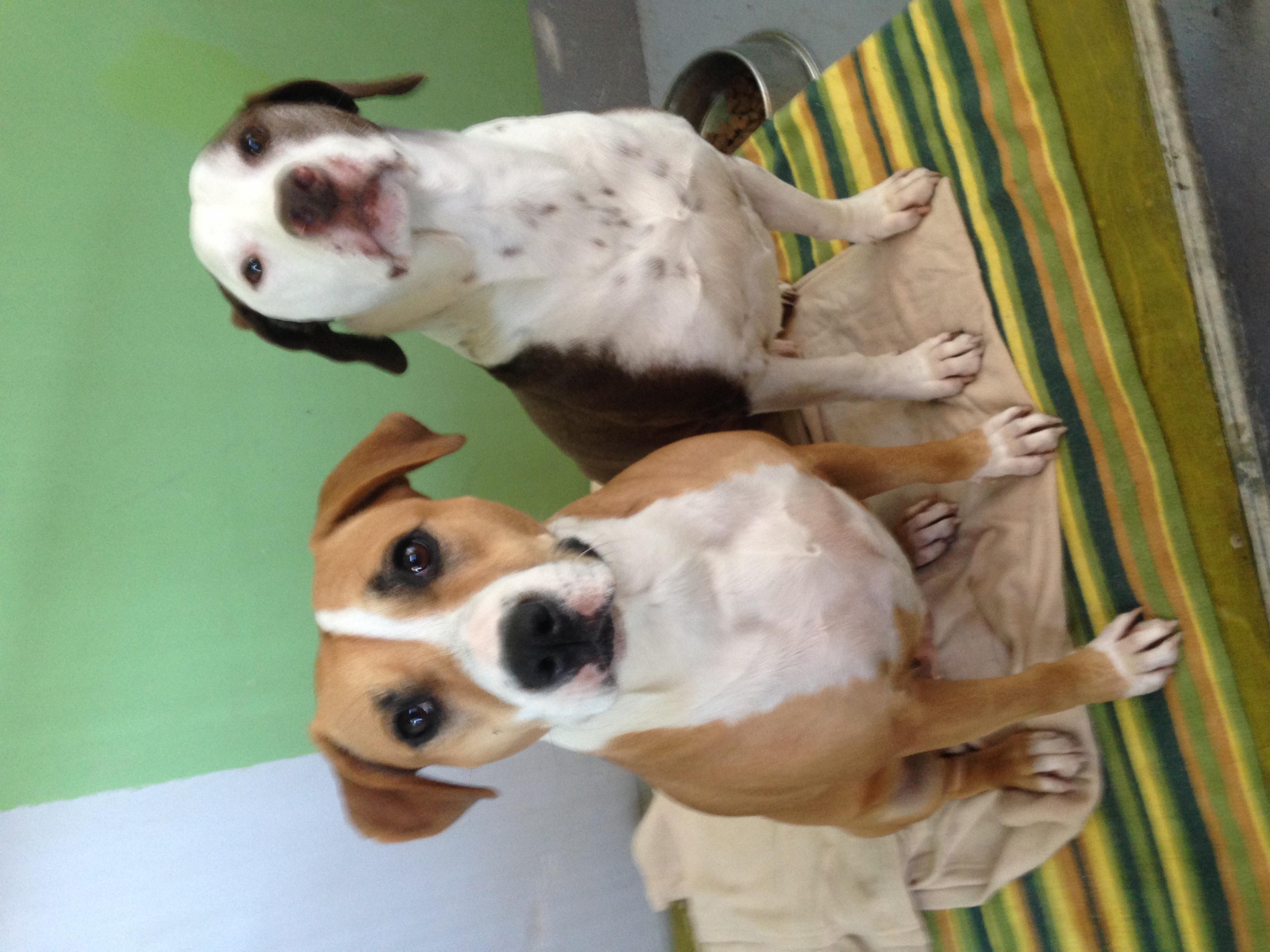 dog_ranch_cyprus_dog_hotel_Porto_Nala.JPG