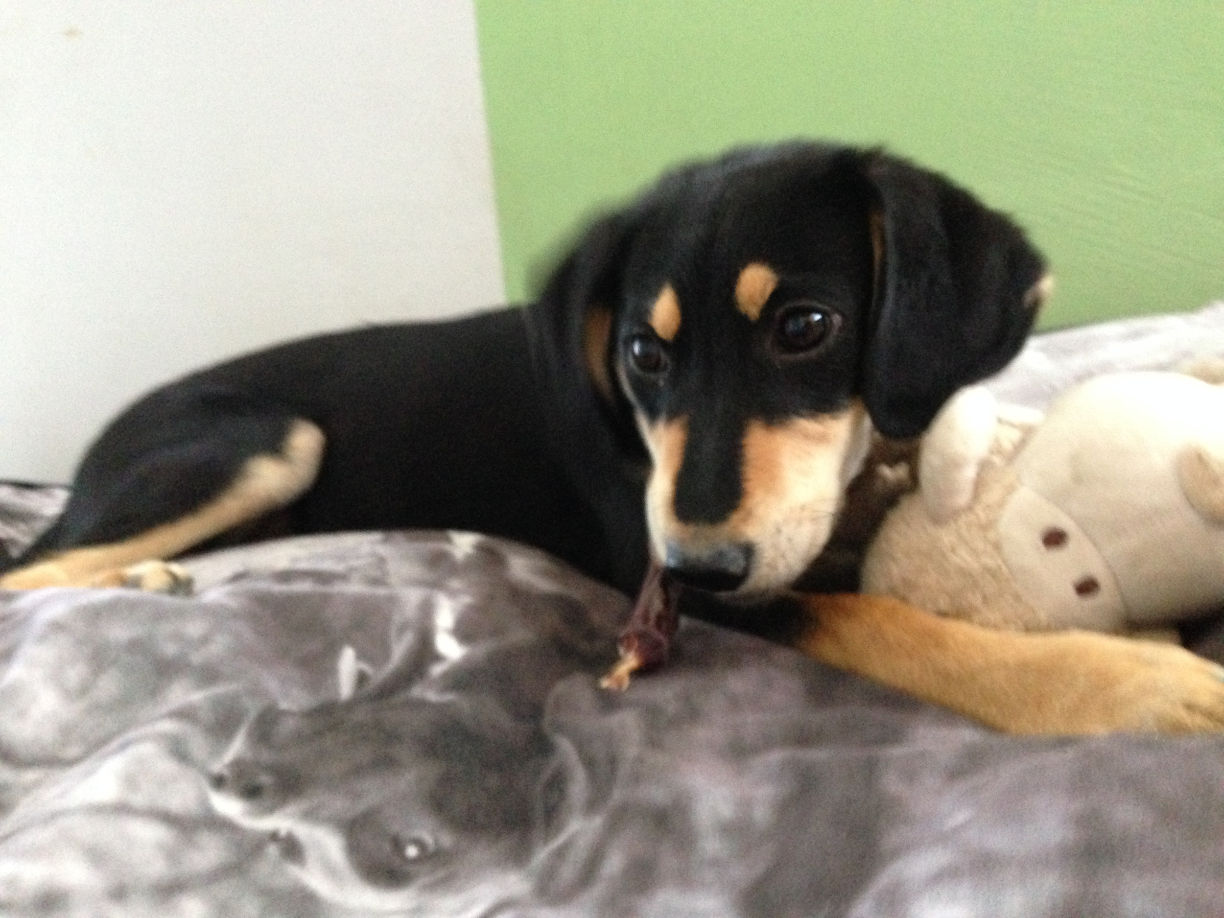 dog_ranch_cyprus_dog_hotel_Little Adra.JPG