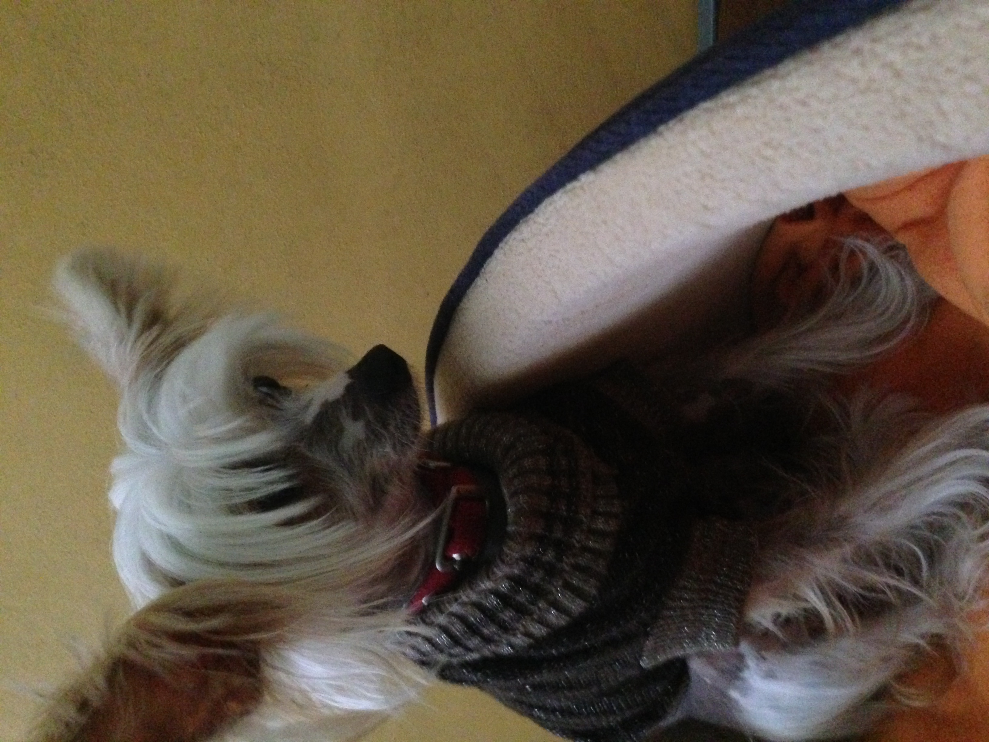 dog_ranch_cyprus_dog_hotel_Eros.JPG