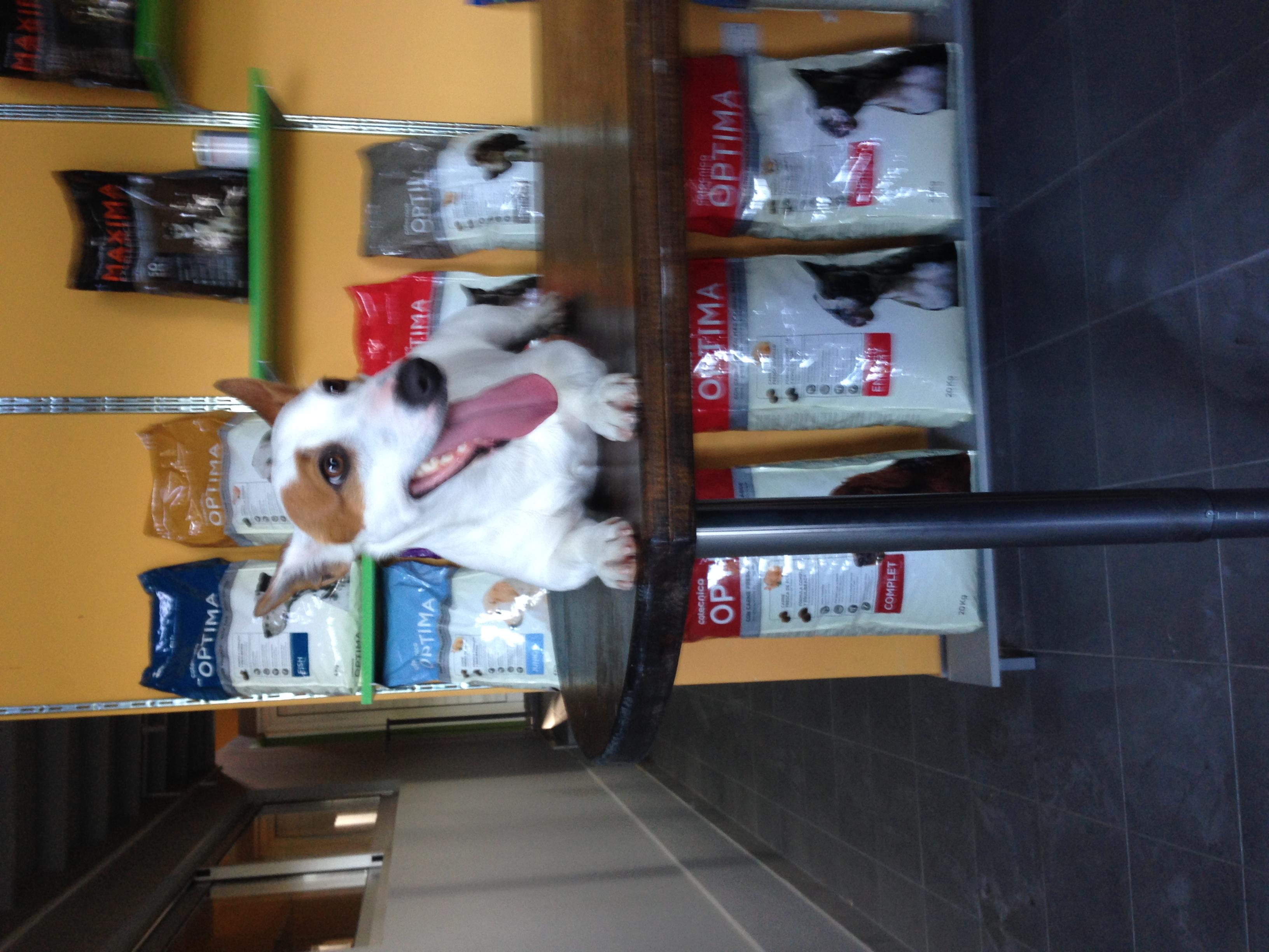 dog_ranch_cyprus_dog_hotel_reception.JPG