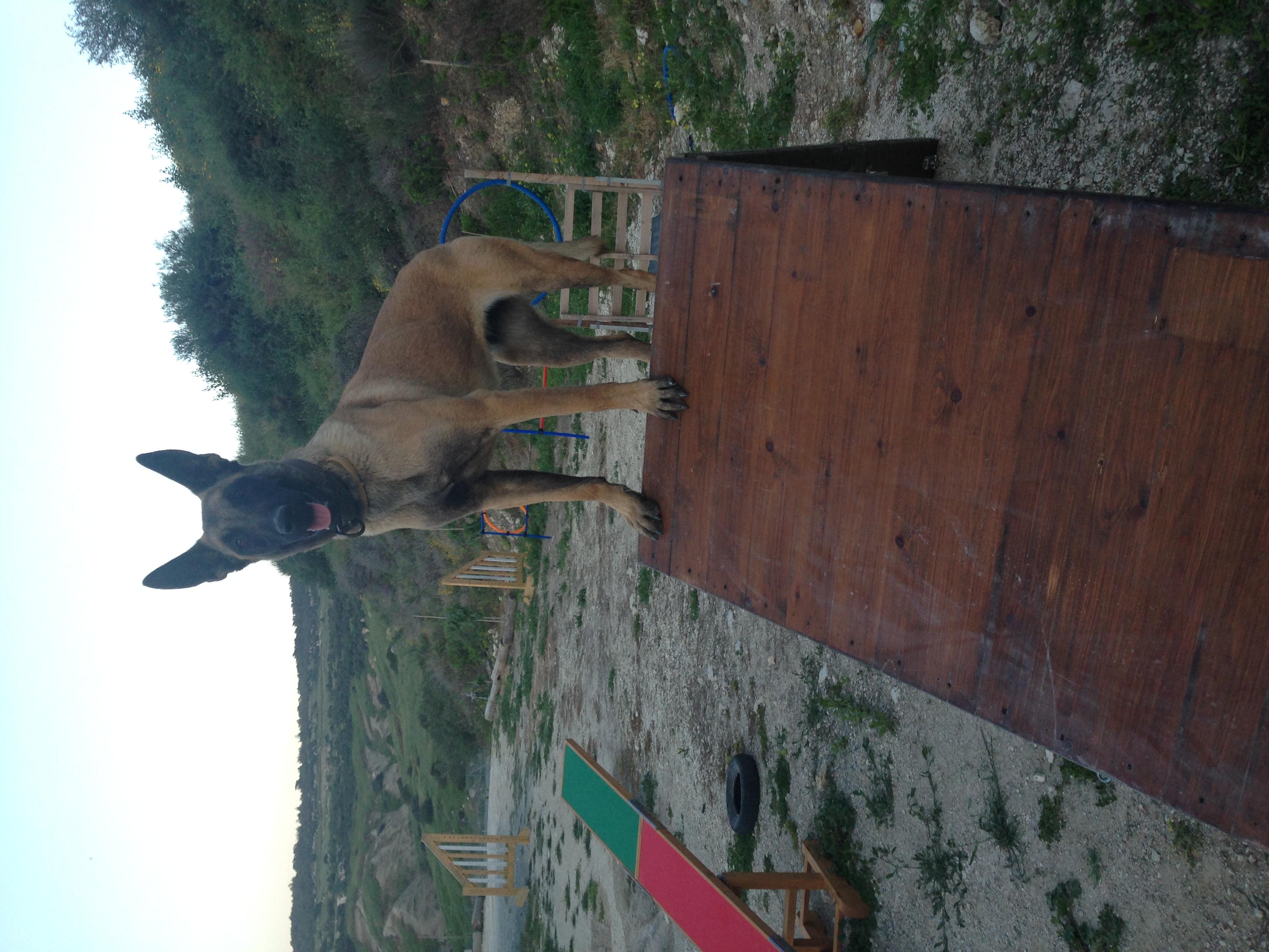 dog_ranch_cyprus_dog_hotel_agility_Tara2.JPG