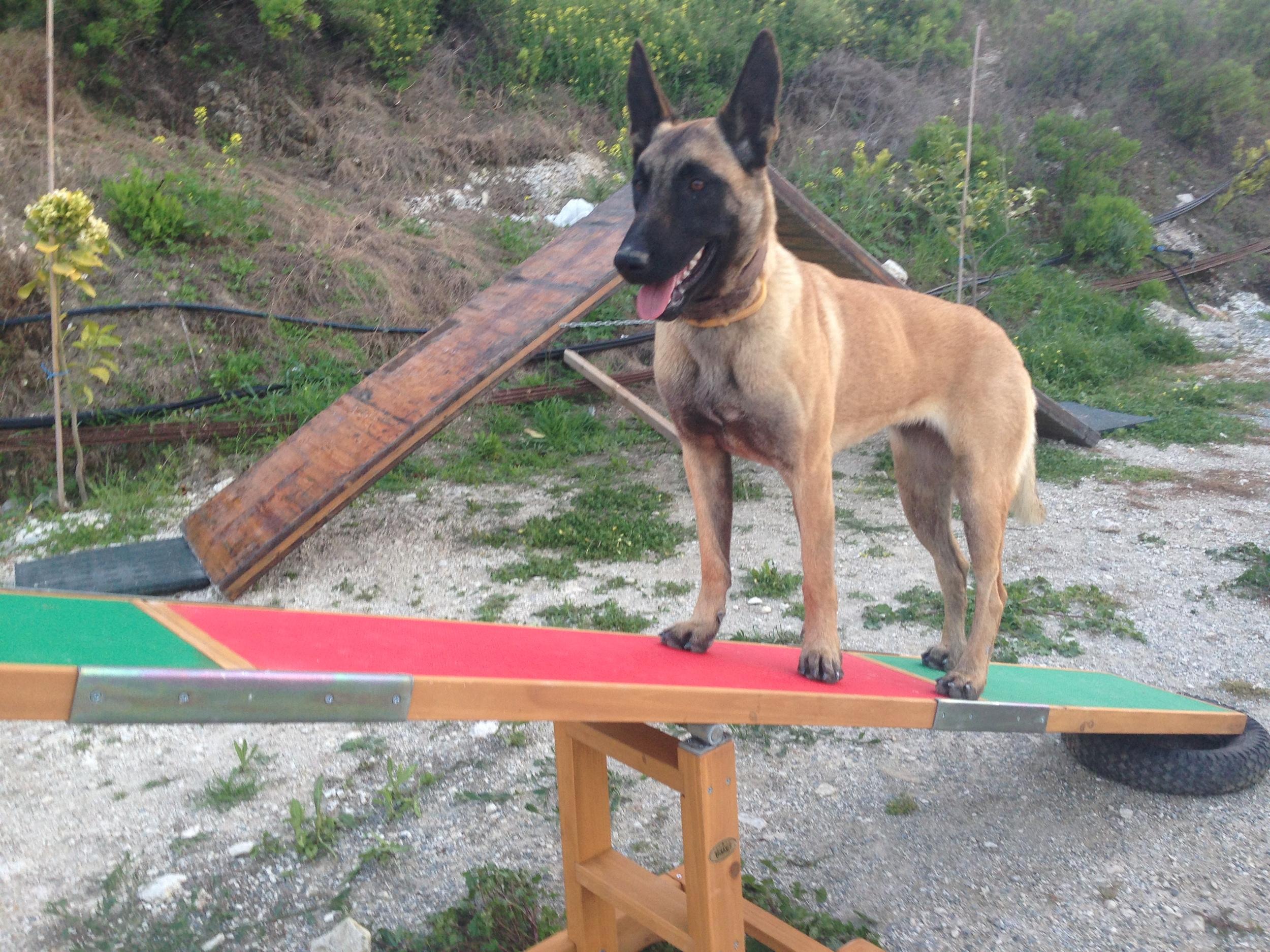dog_ranch_cyprus_dog_hotel_agility_Tara.JPG