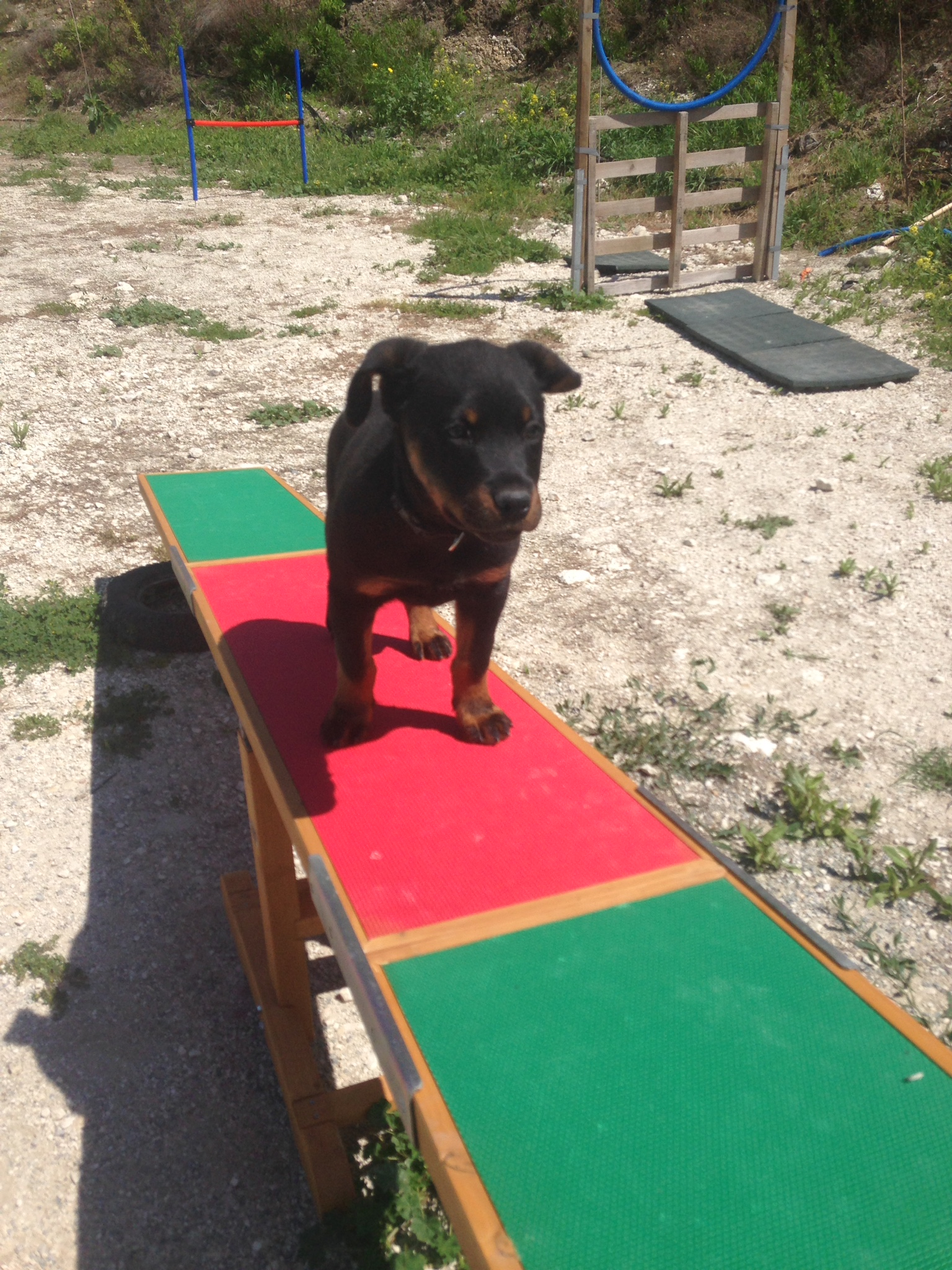dog_ranch_cyprus_dog_hotel_agility_Inca.JPG