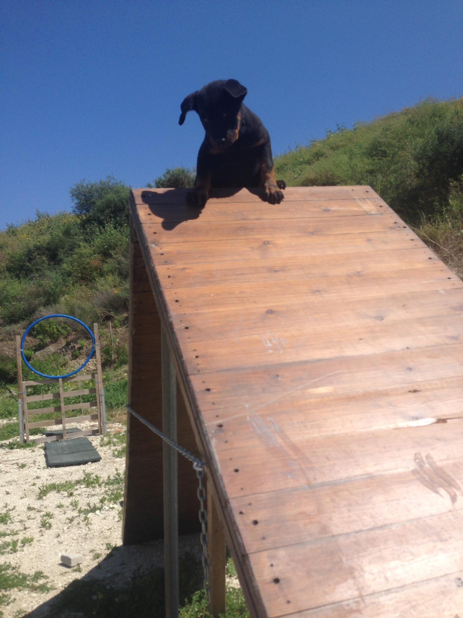 dog_ranch_cyprus_dog_hotel_agility_Inca2.JPG