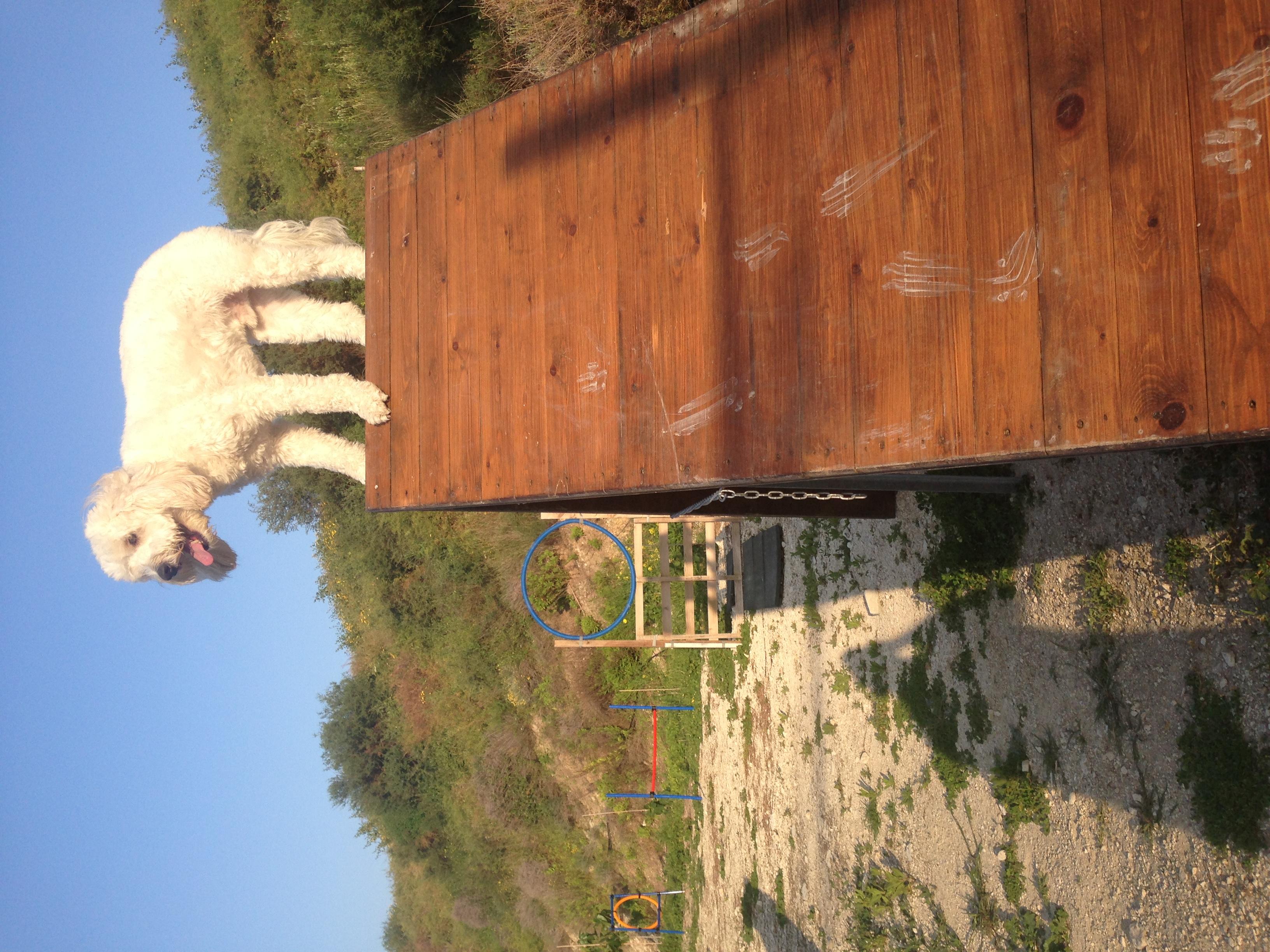 dog_ranch_cyprus_dog_hotel_agility_Milo.JPG