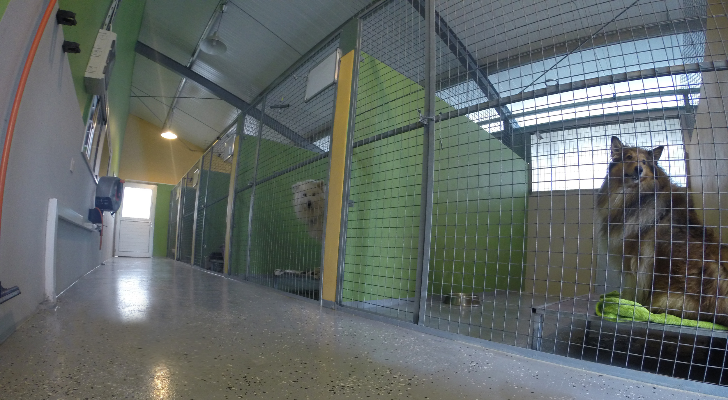 Dog Ranch | Cyprus Dog Hotel | Indoor Boarding Kennels