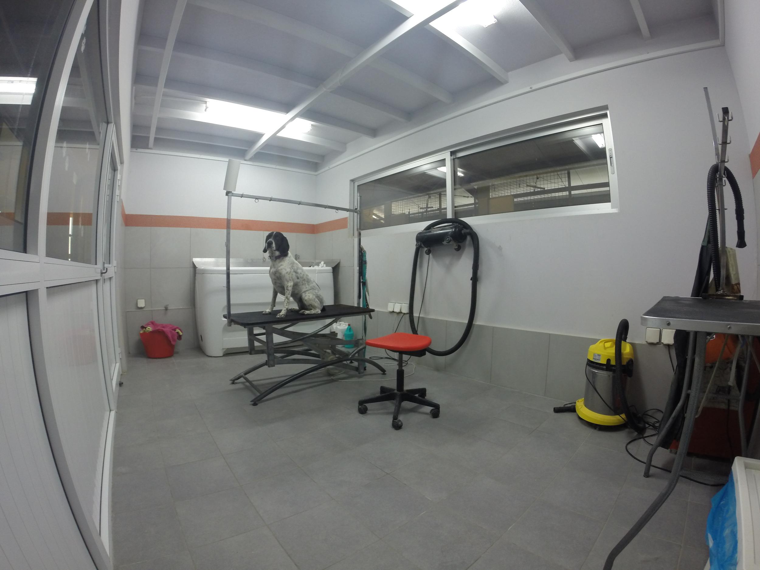 Dog Ranch | Cyprus Dog Hotel | Indoor Boarding Kennels | Grooming Area