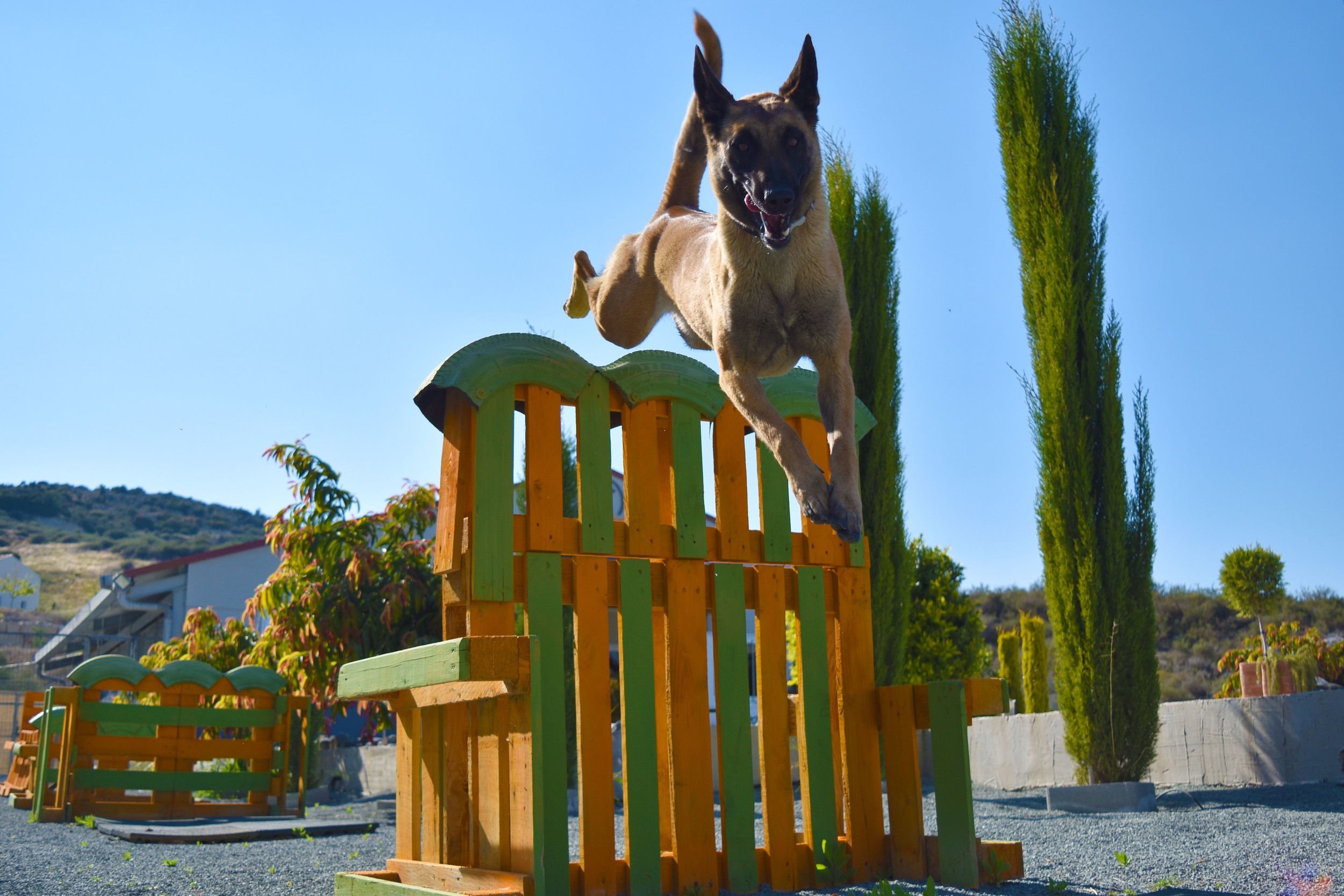 Agility facilities at Dog Ranch