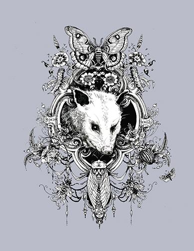 Opossum.jpg