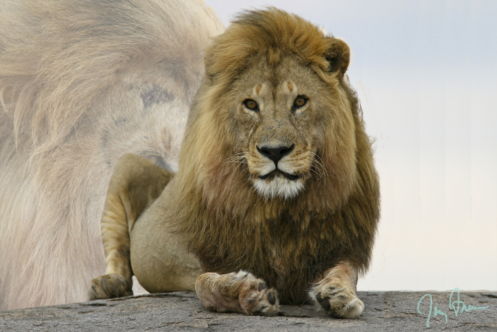 Freeman-Law-Slideshow-Africa-King-of-the-Savannah.JPG