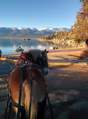 Horse Drawn Sleigh Rides at Sand Harbor State Park