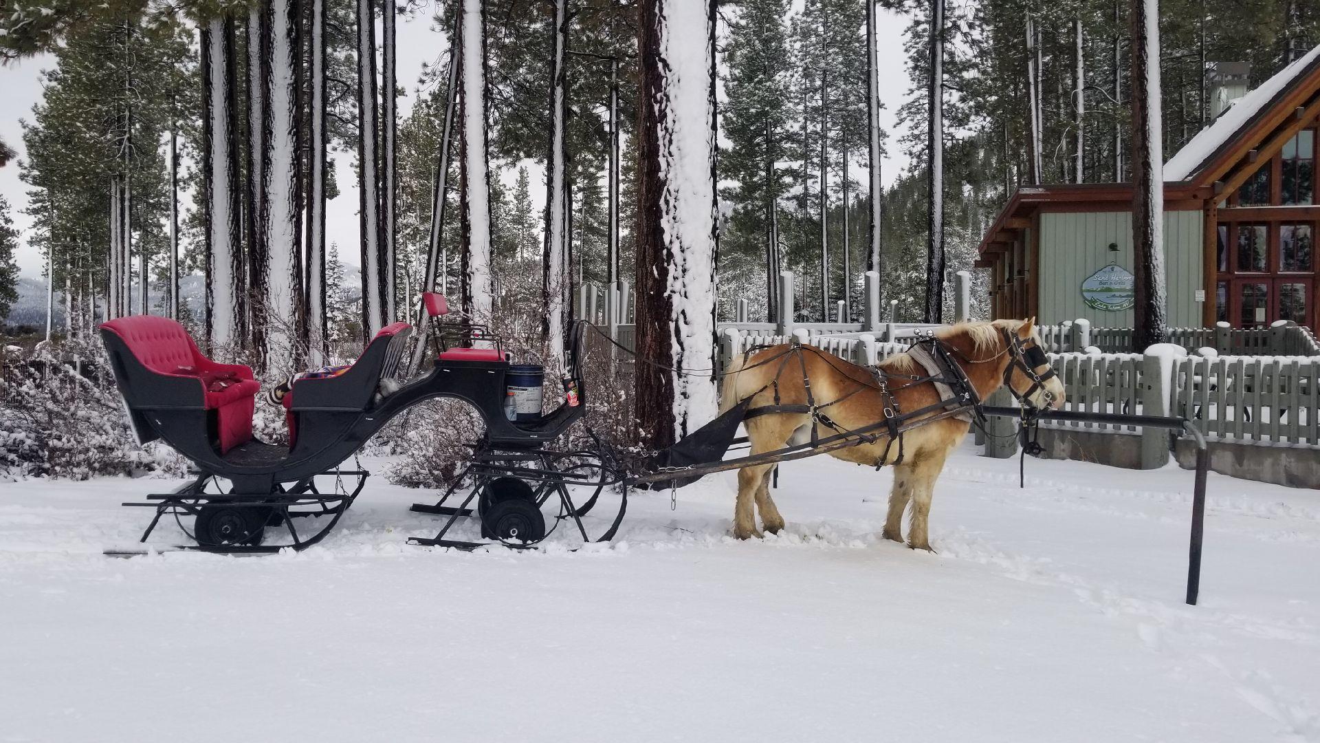 black Santa sleigh SH 2019.jpg