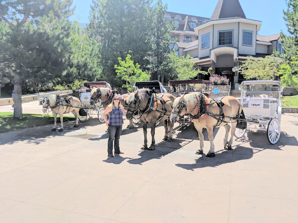 We've enjoyed sharing our beautiful horses & loving home here at Lake Tahoe with you.