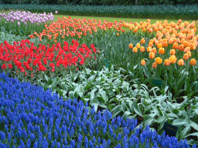If only my home garden was this fabulous!
