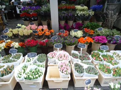 Flowers in Amsterdam.