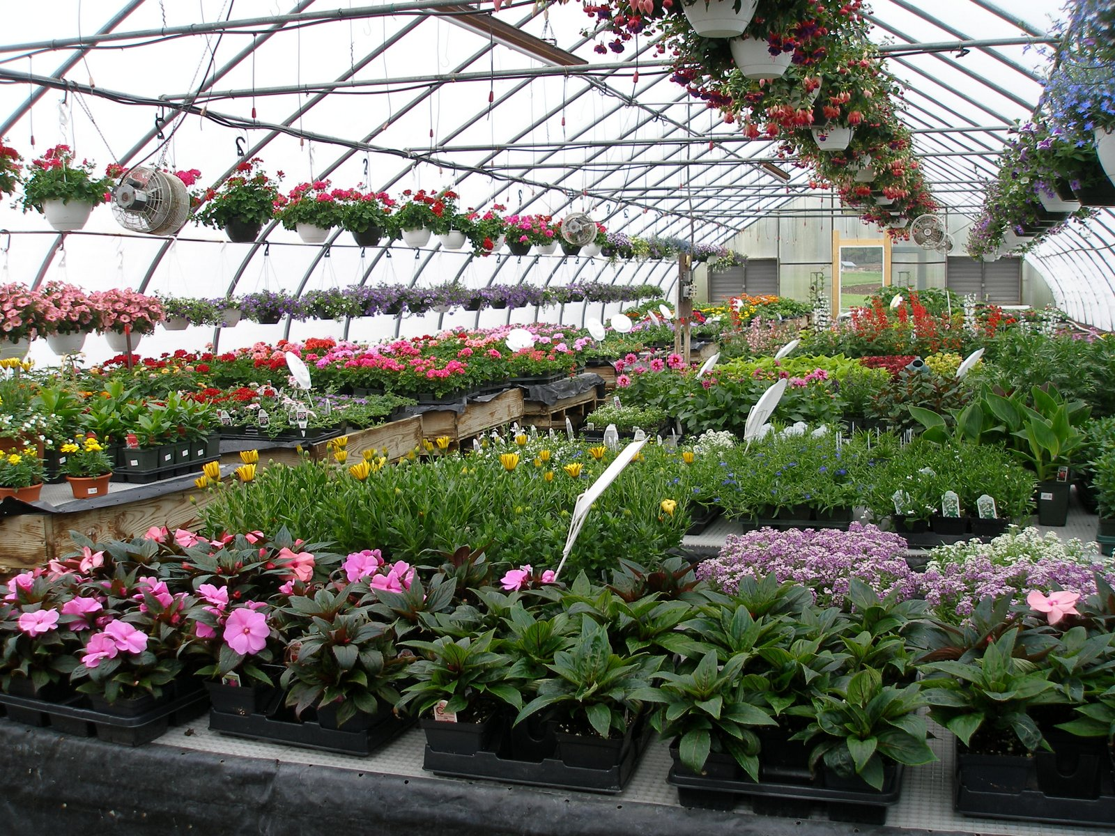Long Hours of work in March and April means a full greenhouse in May