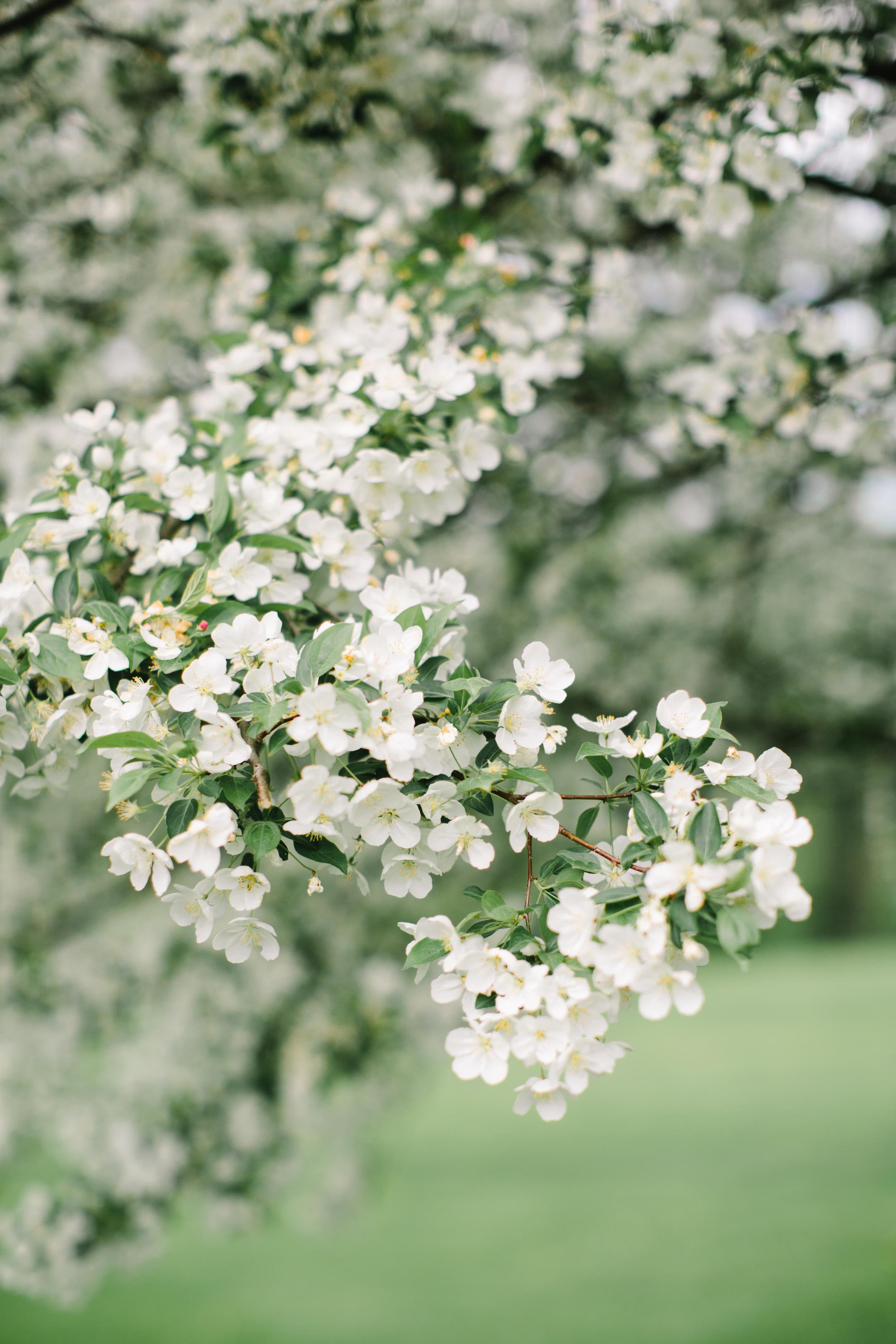 vermont spring apple blossom wedding inspiration