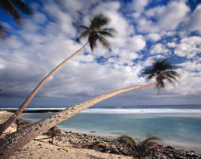 521-11_Blurred_Palms_lo.jpg