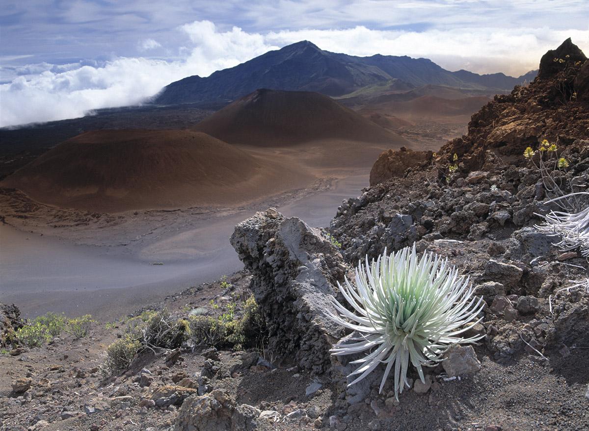 silversword, Haleakala Crater, Maui
