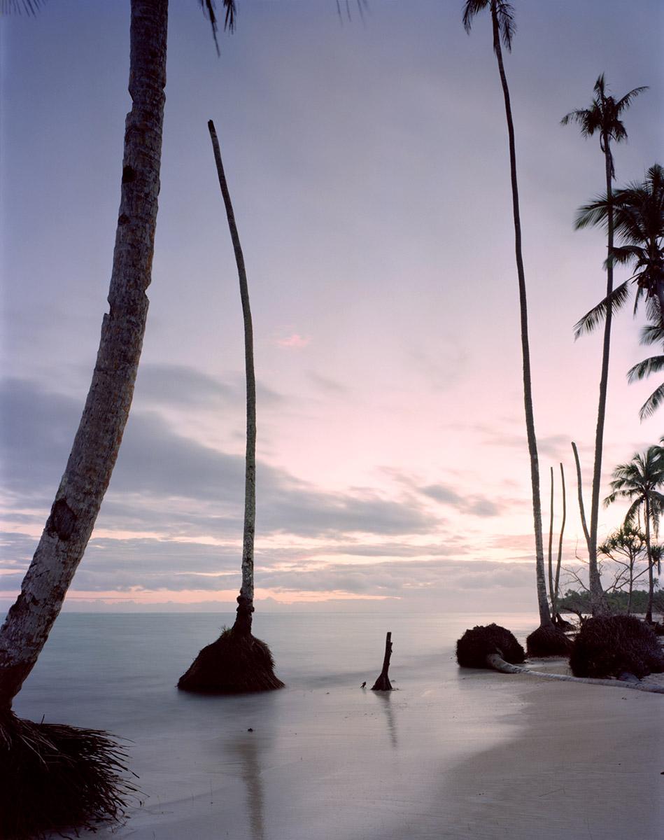 dead palm, Upolu, Samoa