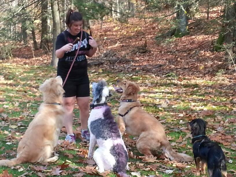 West Side Pet Sitting Dog Walker Pet Sitter Cat Sitter Westfield Feeding Hills Agawam Massachusetts