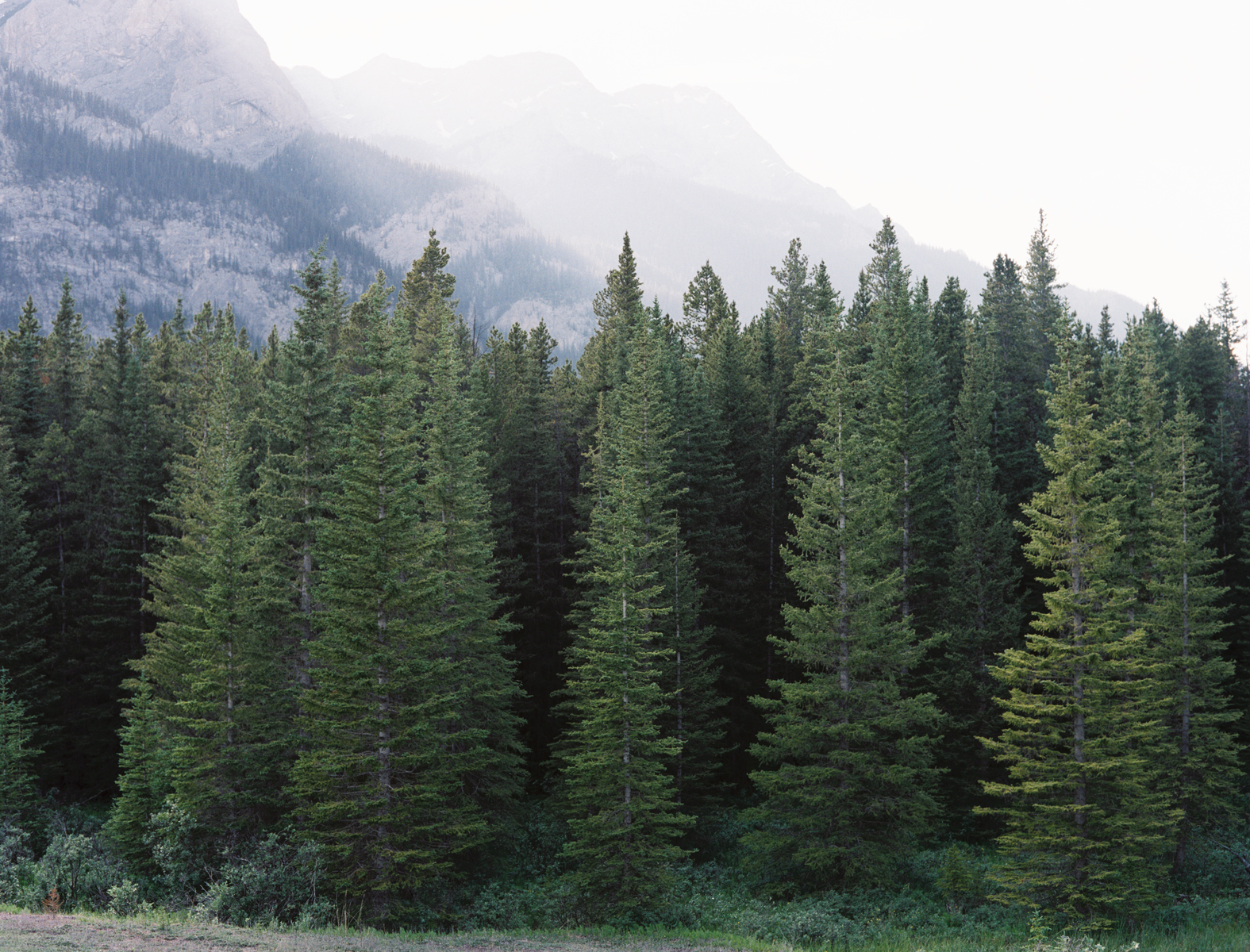 """Image via Bing search for """"evergreen trees. six feet tall just isn't tall enough, son."""""""