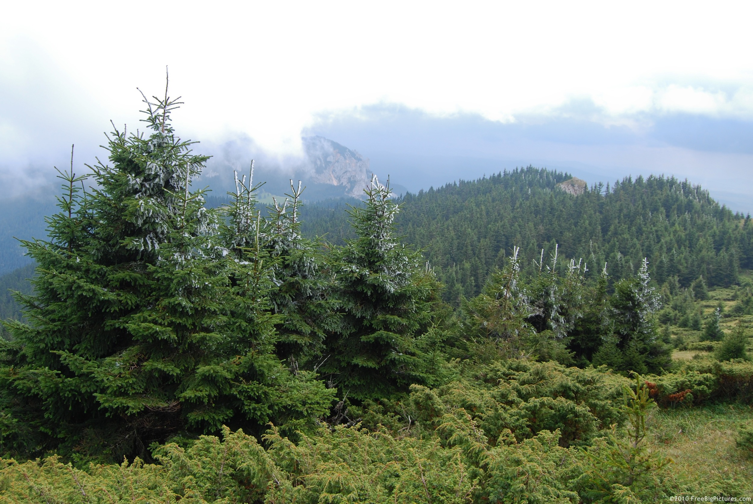 """Image via Google search for """"evergreen trees. Ihaven't seen you since the accident"""""""