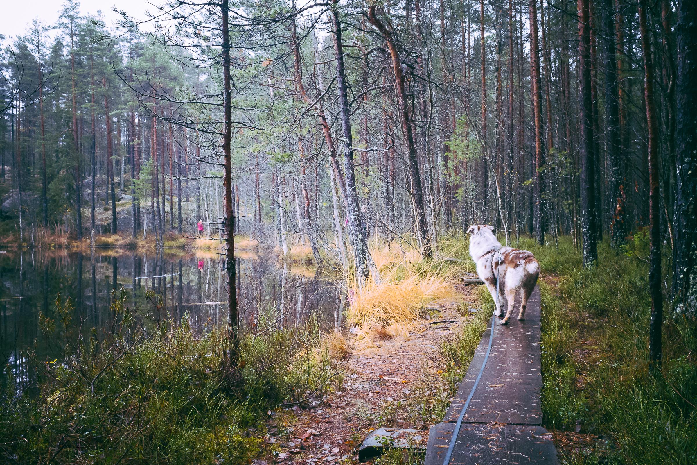 fire-on-trail-in-nuuksio.jpg