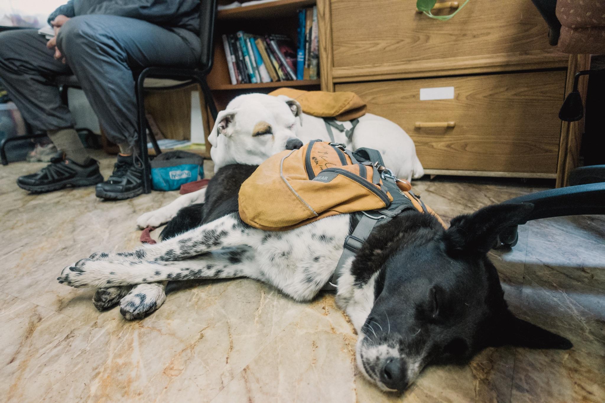 Tired hiker doggies.