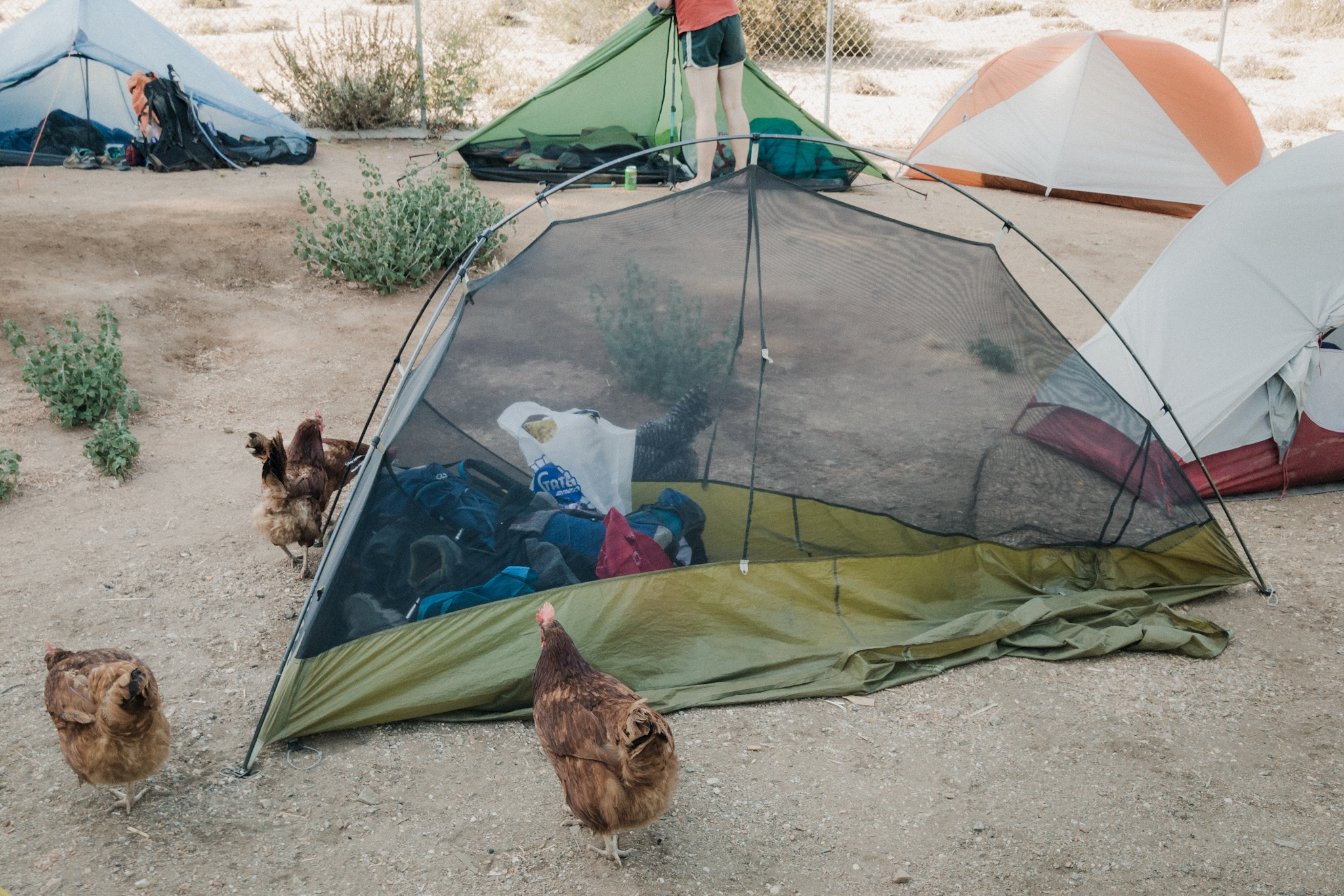 Don't leave your tent open!