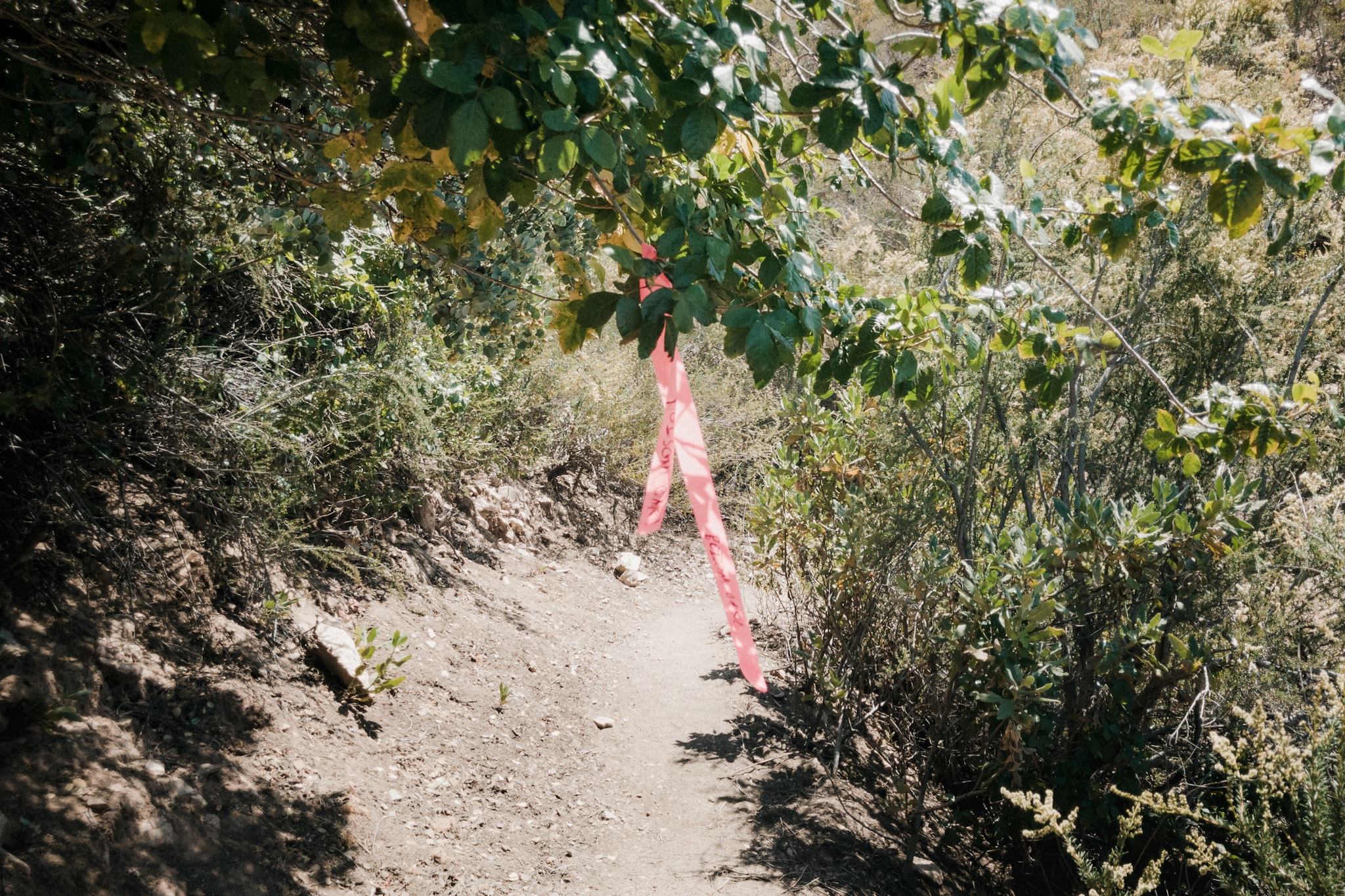 Warning about poison oak on trail.