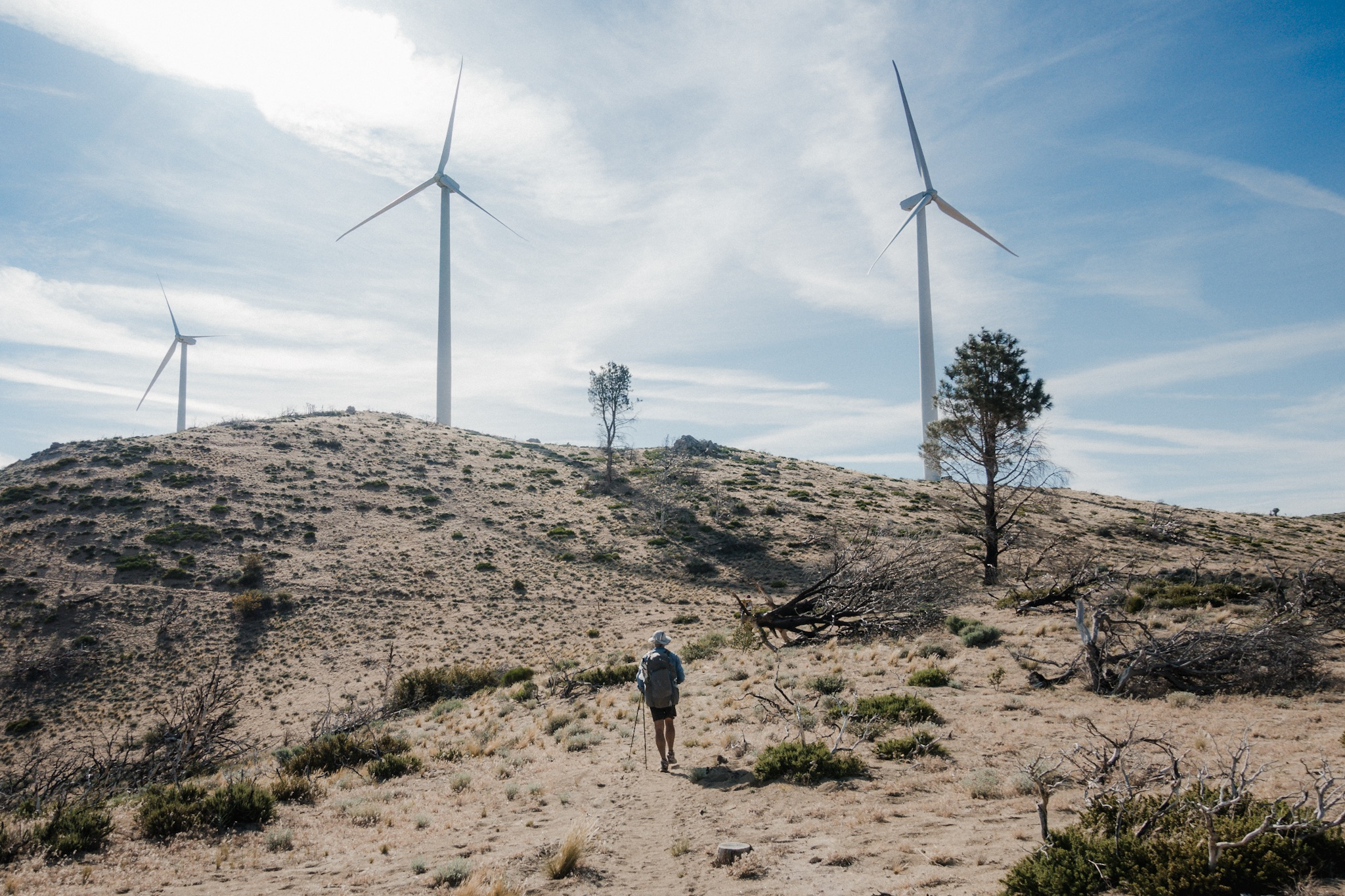 Blis among windmills.