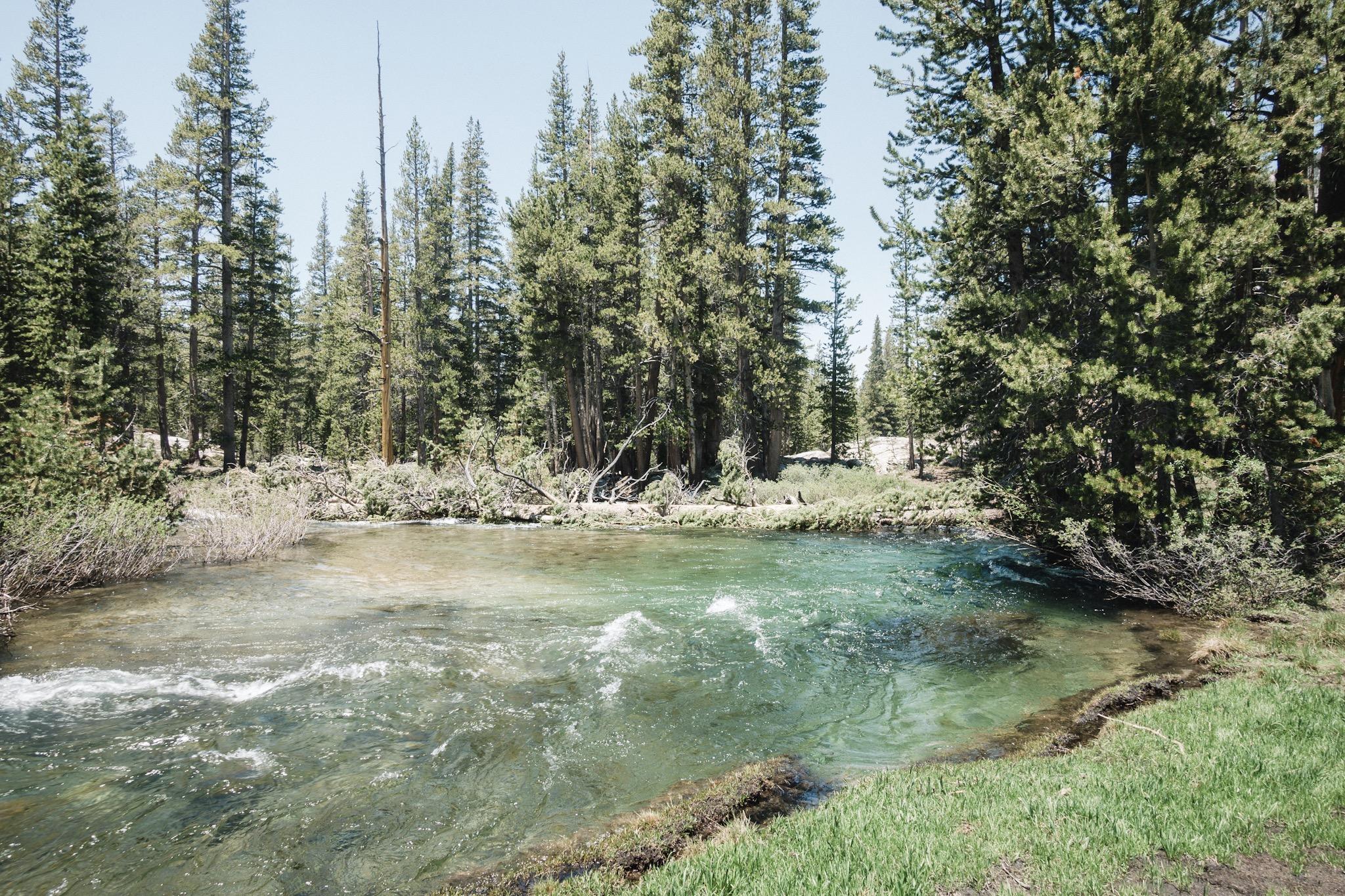 The fallen tree across part of the Bear Creek.