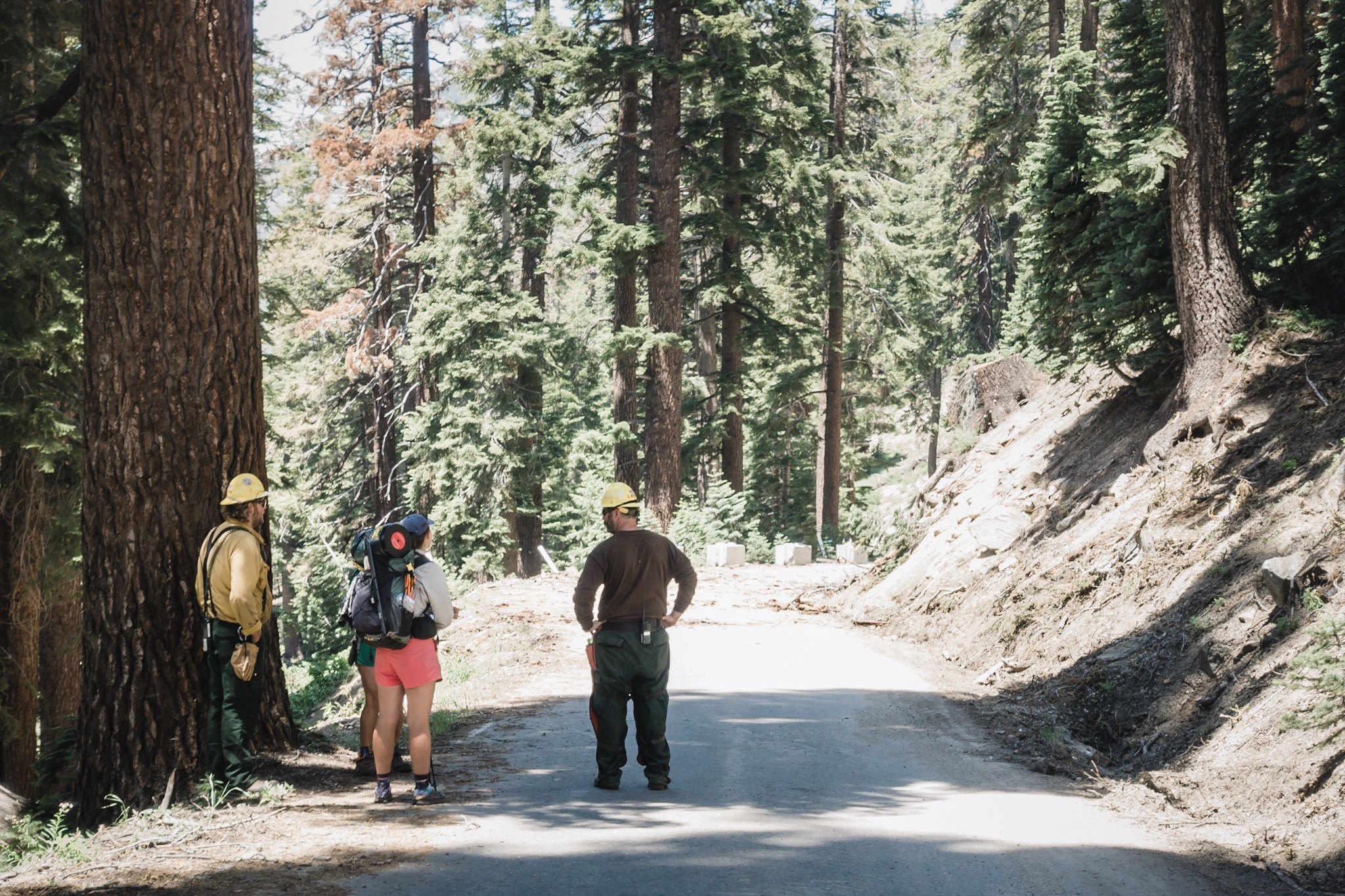 Indigo and LL talking to the forest crew.