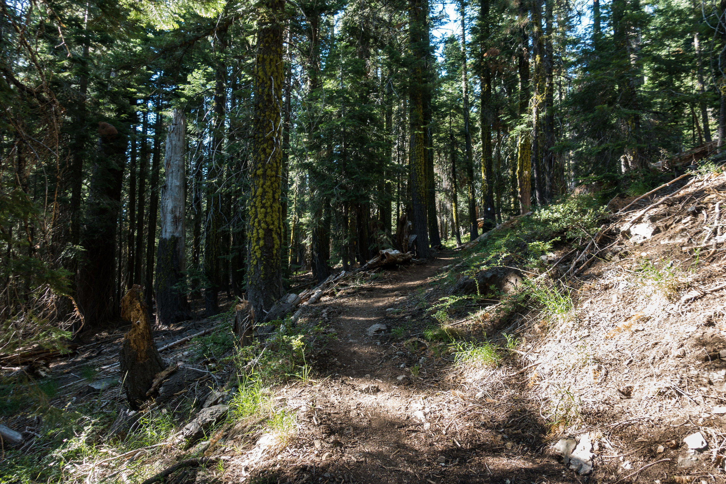 norcal-forest.jpg