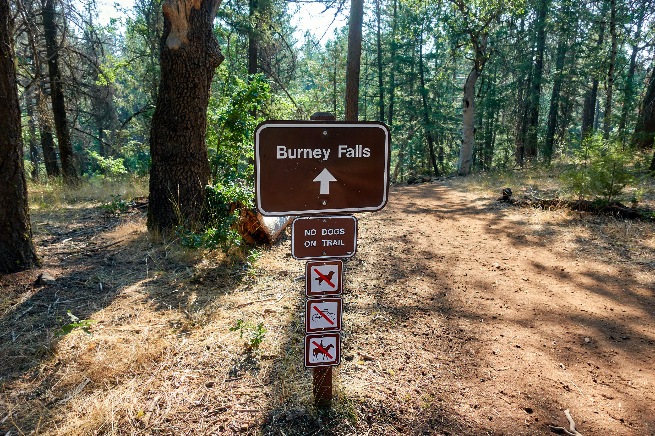 Side-trail to Burney Falls.