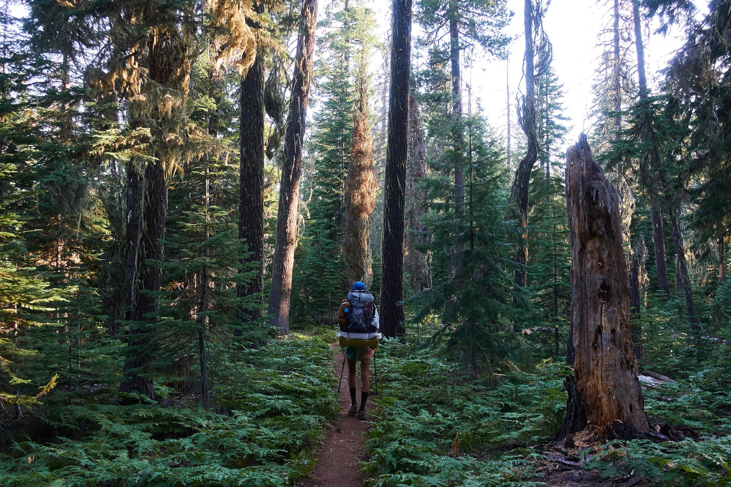 Morning walk through the woods.