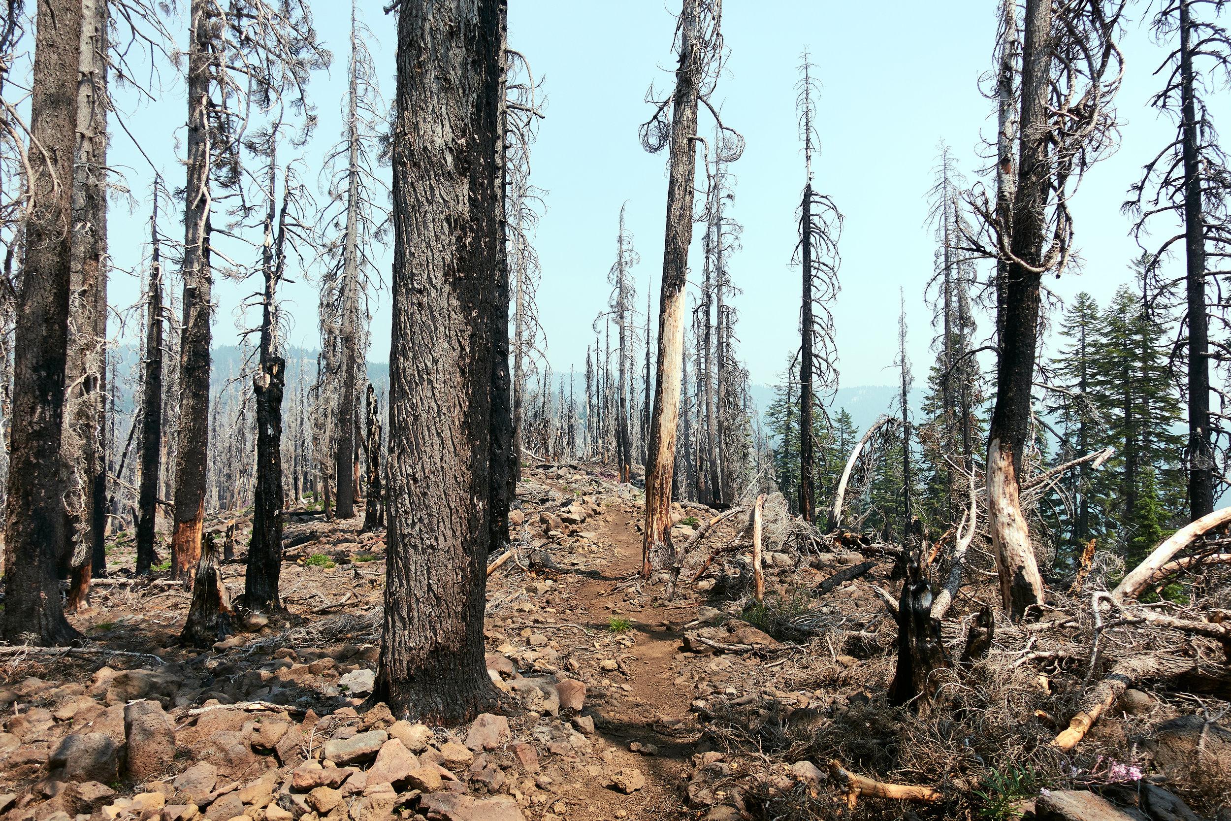 Walking through many burn areas.