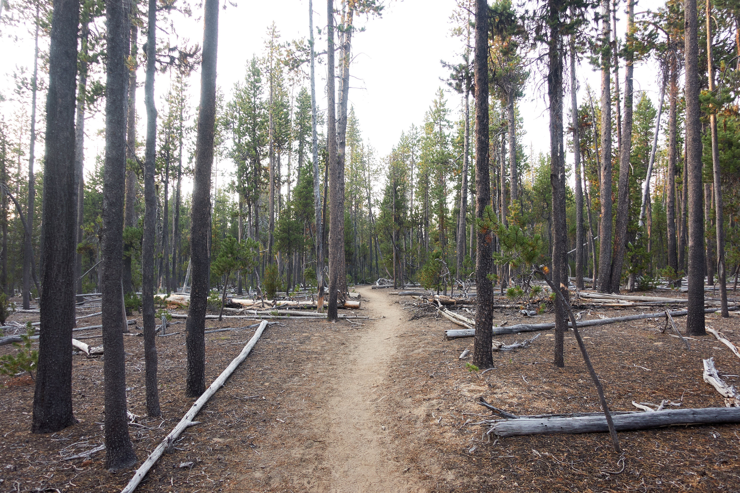 Oregon Skyline Trail alternate.