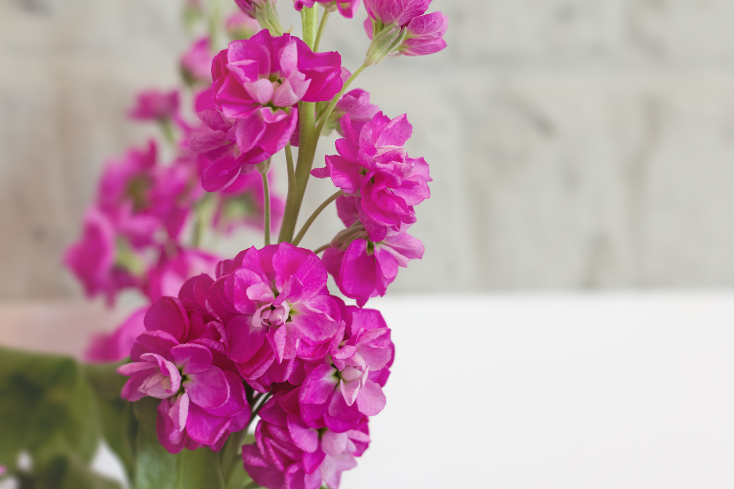 A close-up of purply pink flowers - the centre piece on the table