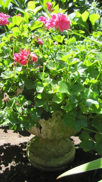 plantCourt7.jpg