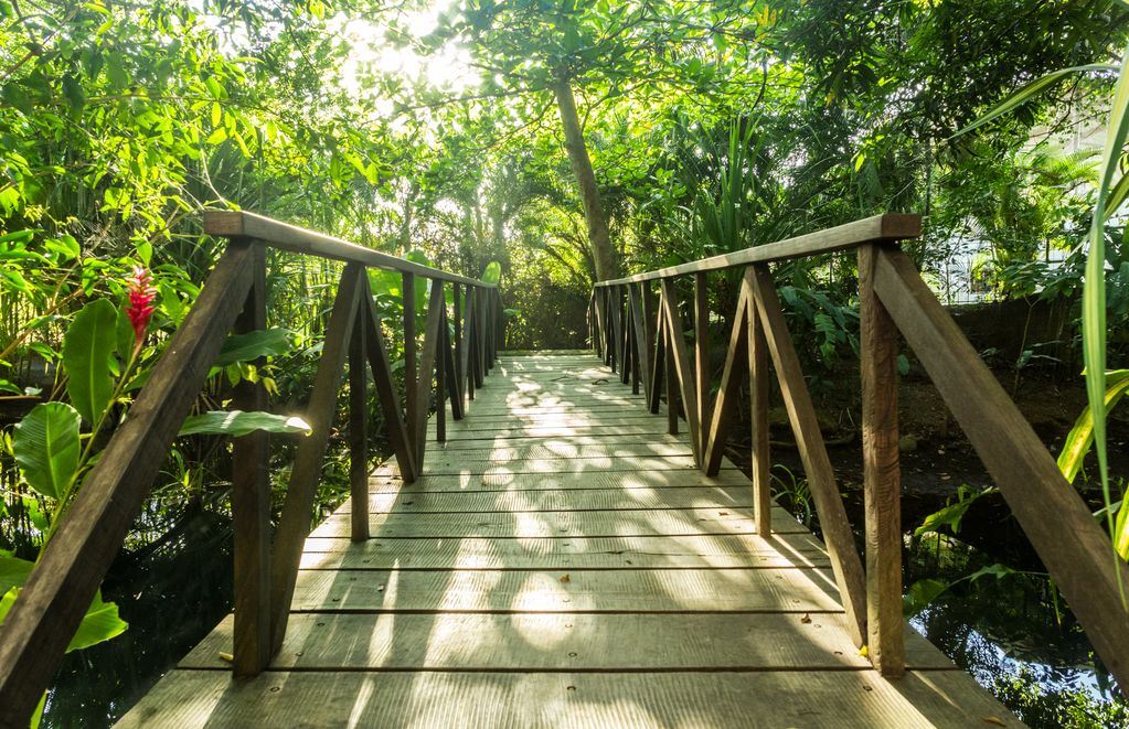 macaw beach jungle path.jpg
