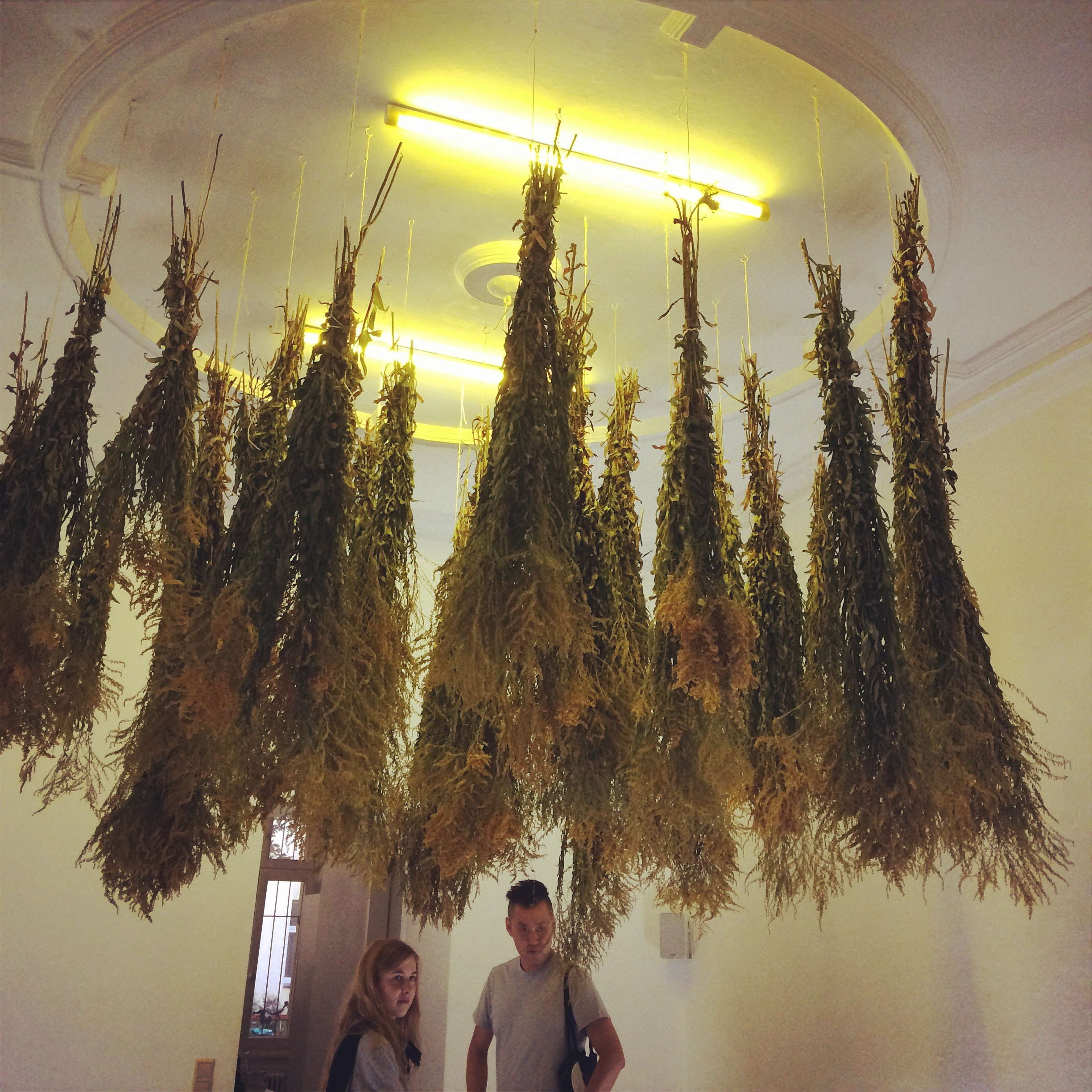 collected goldenrods in the gallery Uqbar