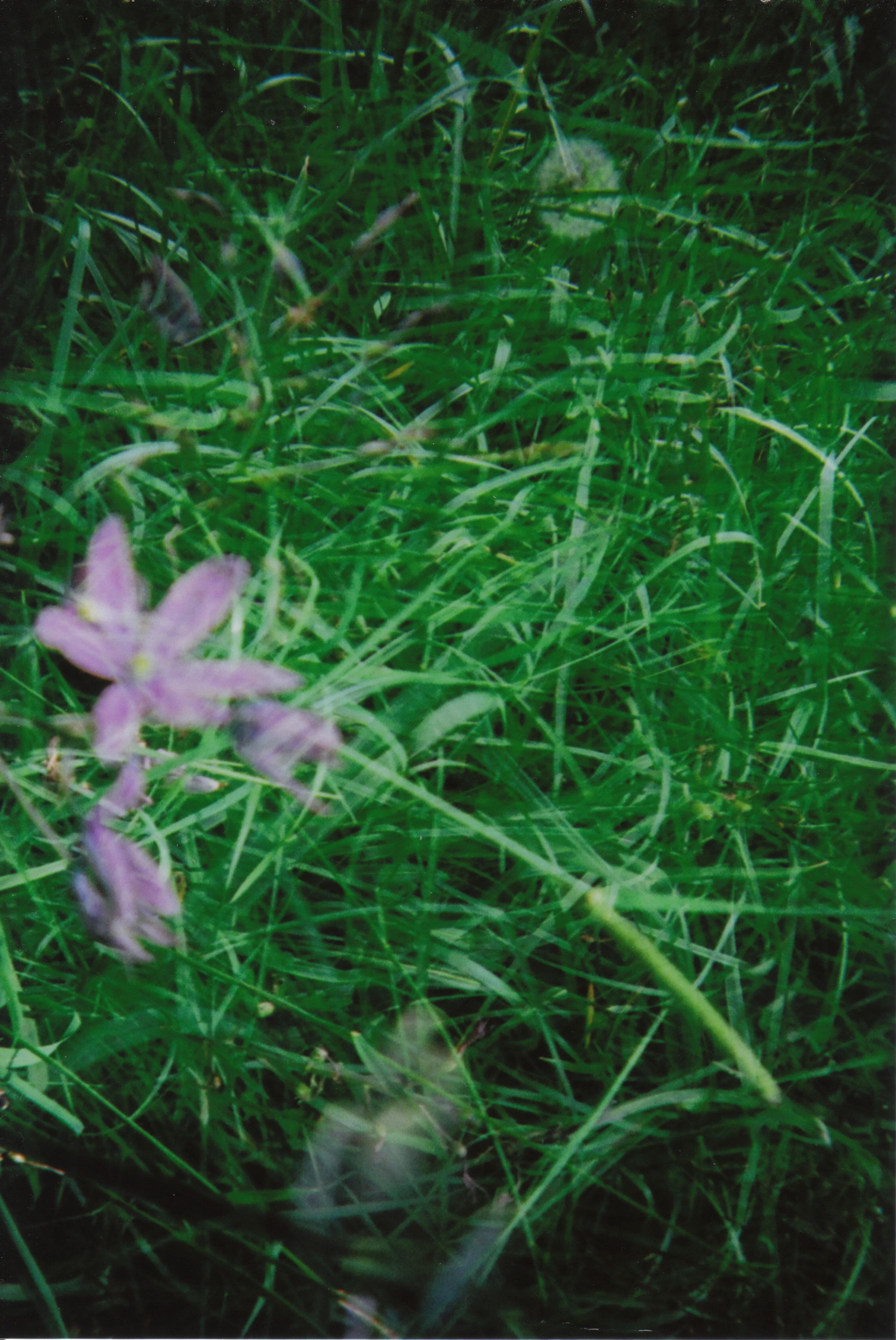 holga_nature_0005.jpg