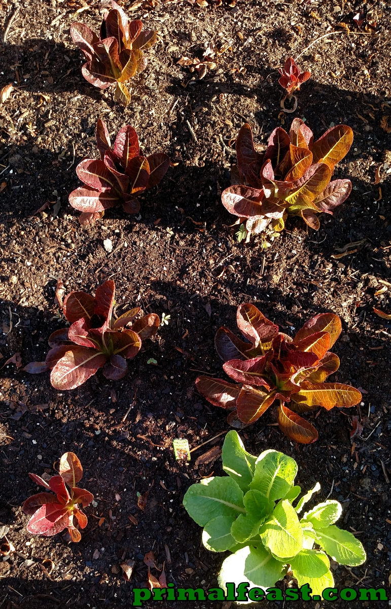 2015-1015-garden-3-004.jpg