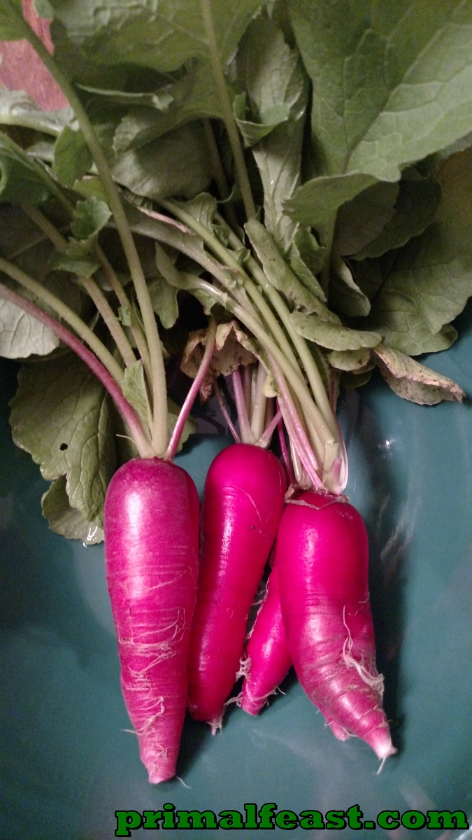 2015-1204-heirloom-radish-006.jpg