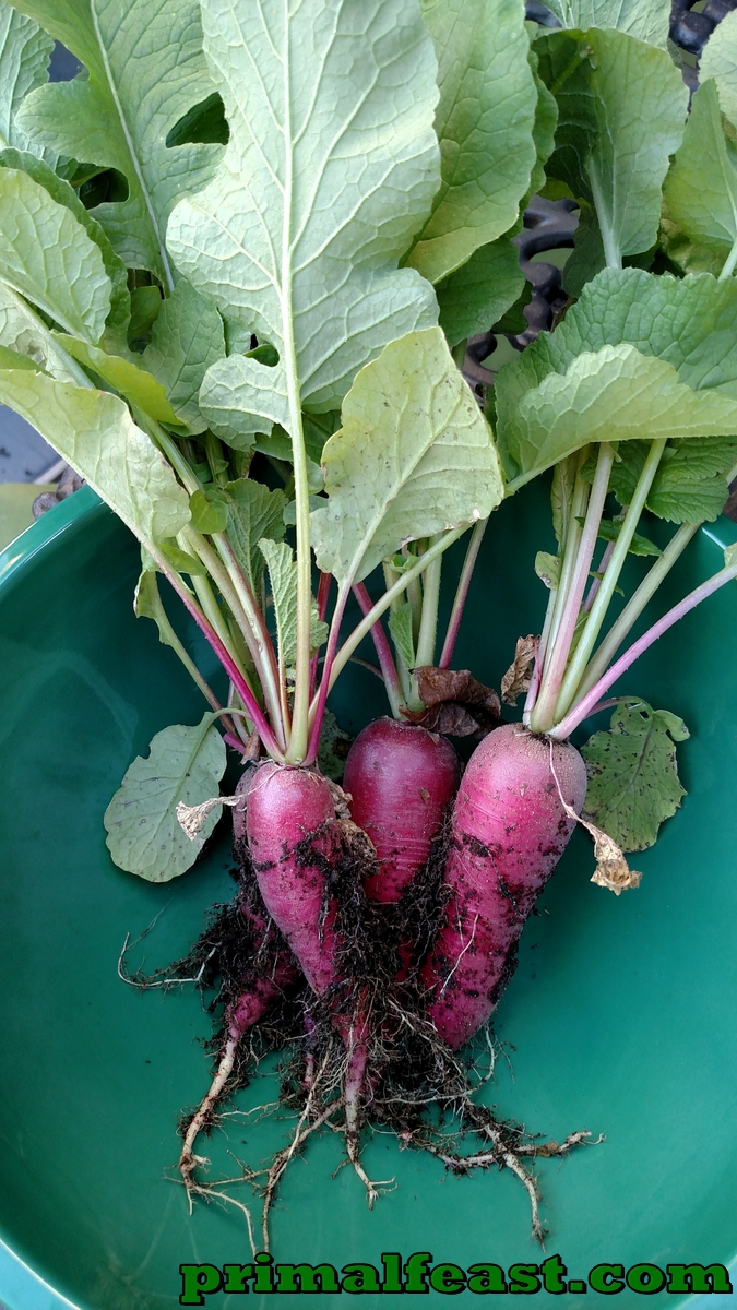 2015-1204-heirloom-radish-001.jpg