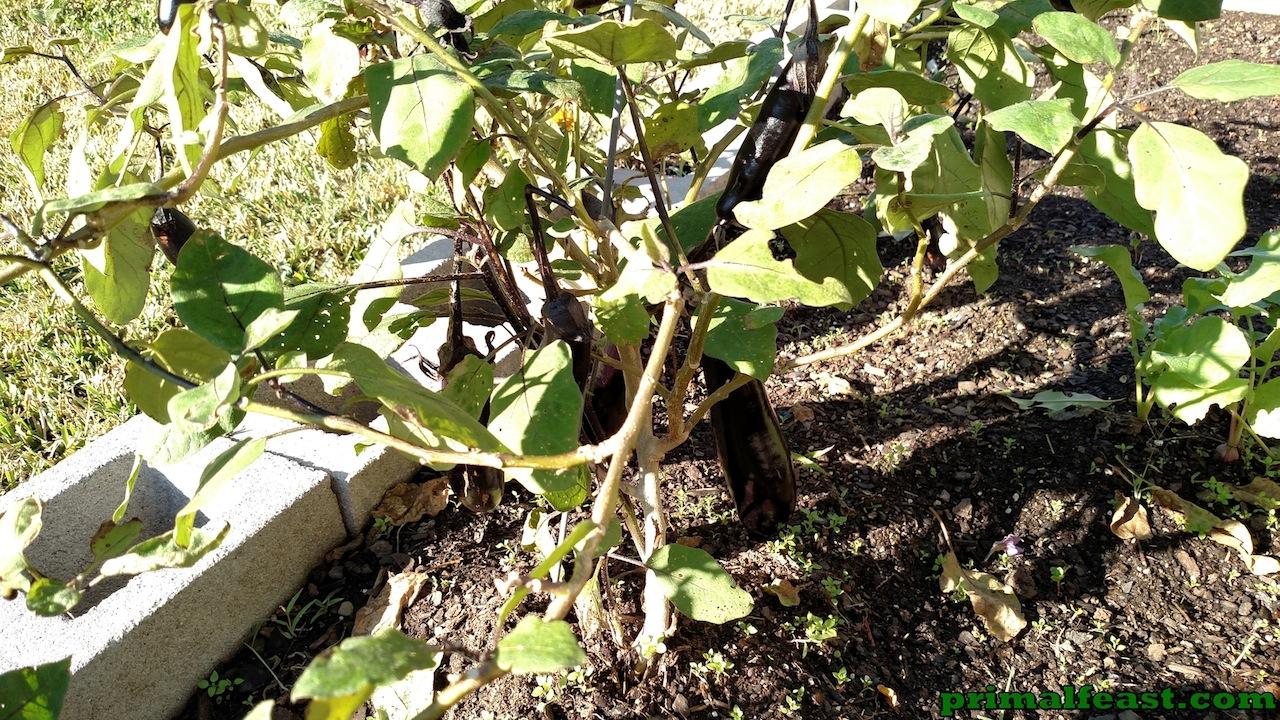 2015-1204-japanese-eggplant-2-001.jpg